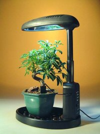 Desktop Grow Light Mellobonsai Com