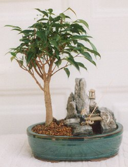 Ficus-Stone Landscape Scene with Fishing Pole