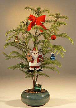 Norfolk Island Pine - With Decorations