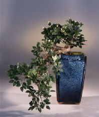 Artificial  Chinese Elm Bonsai Tree
