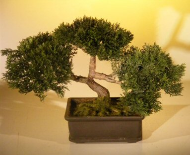 Artificial Japanese Cedar Bonsai Tree